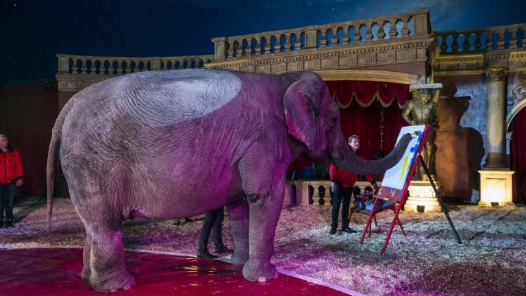 Szandra a cirkuszban fest