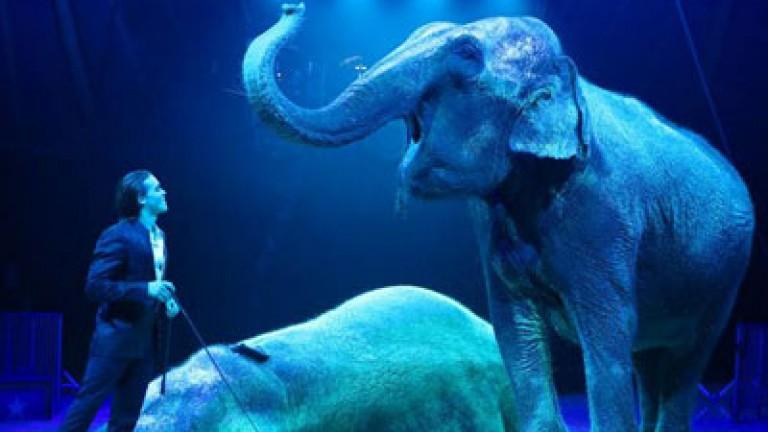 Amadeo Folco - indiai elefántok