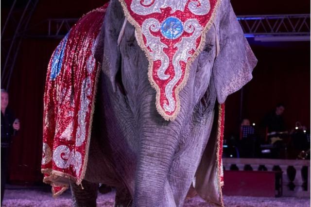 szandra_elefant